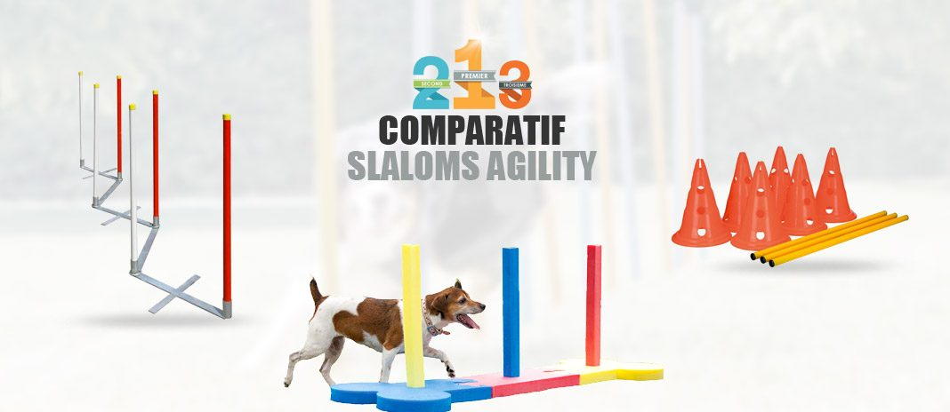 meilleur slalom agility