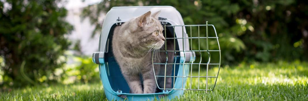 caisse transport pour chat