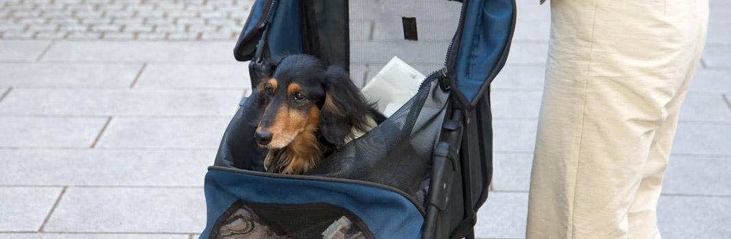 poussette pour chien