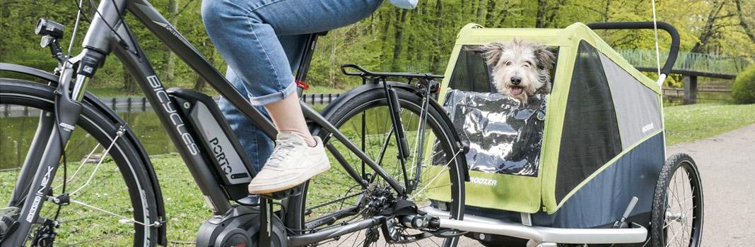 remorque vélo pour chien