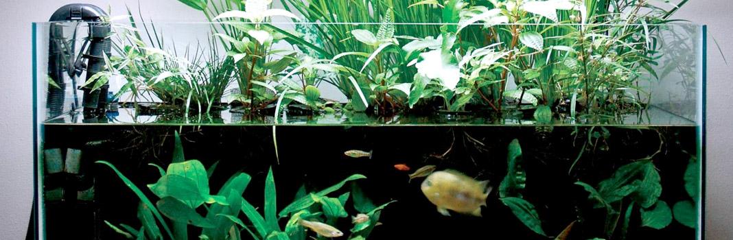 refroidisseur aquarium