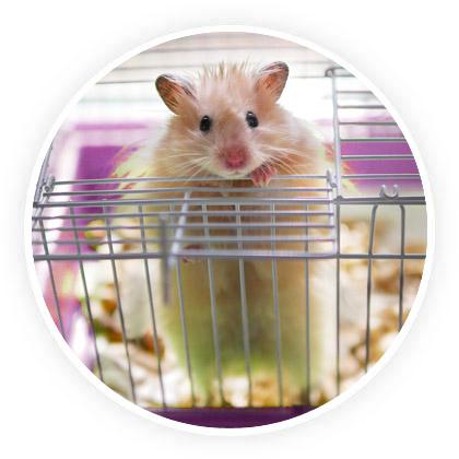 types de cage